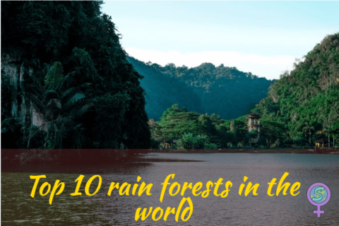Top 10 rain forests in the world