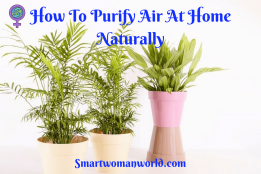 How To Purify Air At Home Naturally