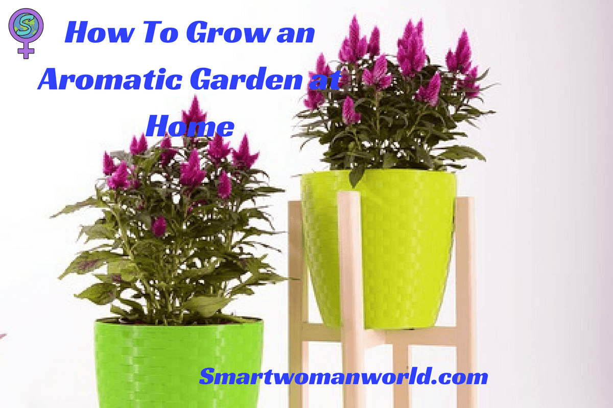 How To Grow an Aromatic Garden at Home: 9 Plants That You ...
